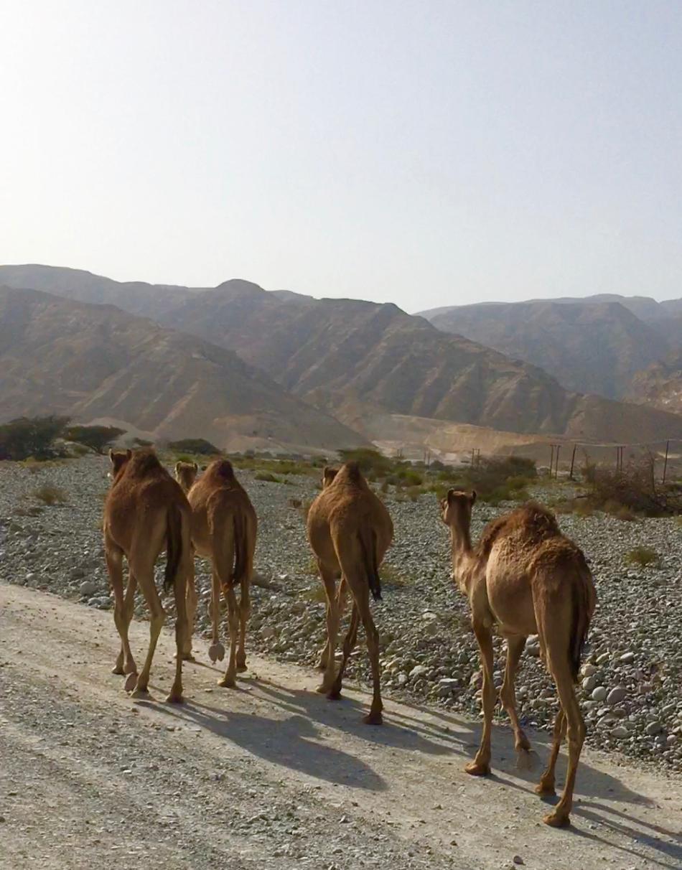 Oman 2018 favorieten - 158 van 158